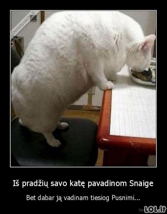 Kai katė nebeatitinka savo vardo