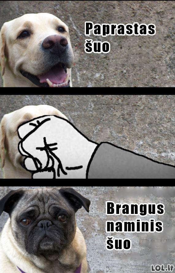 Brangių šuniukų fabriskas