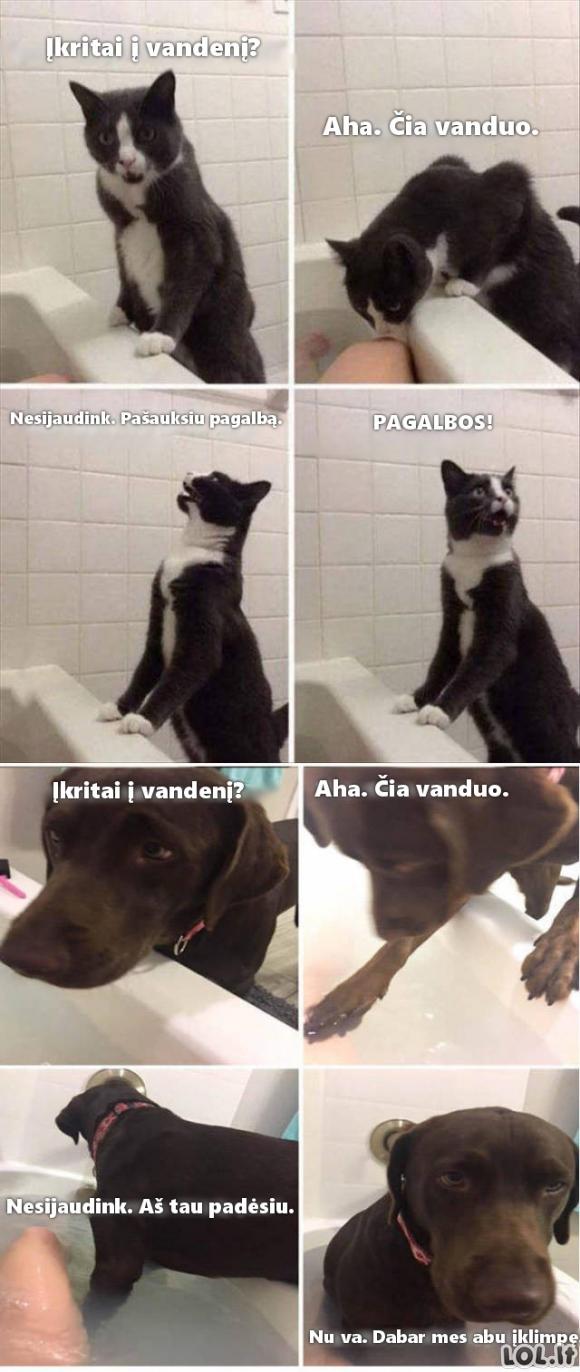 Kaip ištikus nelaimei elgiasi katinas ir šuo
