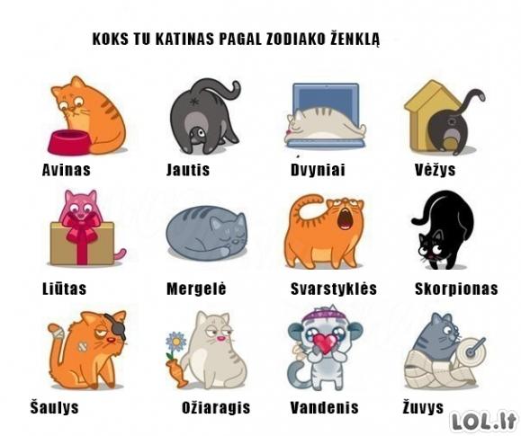 Katinas pagal zodiako ženklą