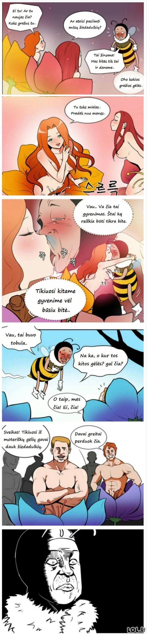 Sunkus bitino gyvenimas