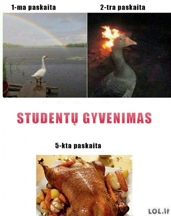 Studentų gyvenimas