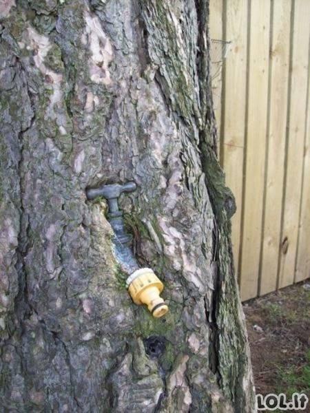 Alkani medžiai