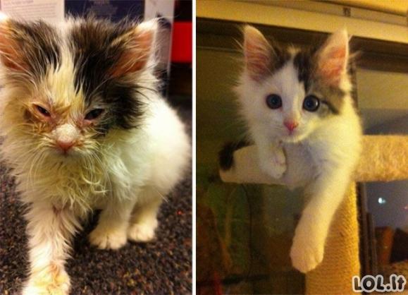 Katės prieglaudoje ir namie [15 FOTO]