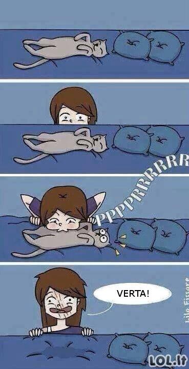 Žaidimas su katuku
