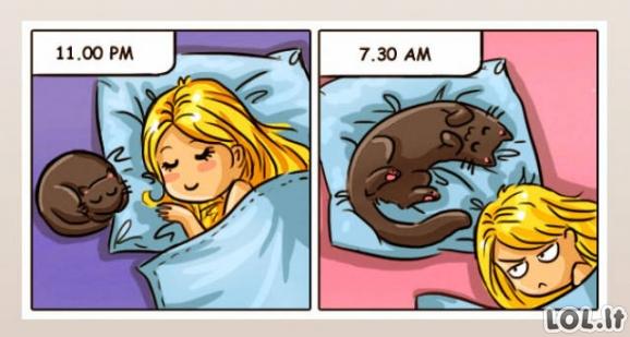 Miegas su katuku