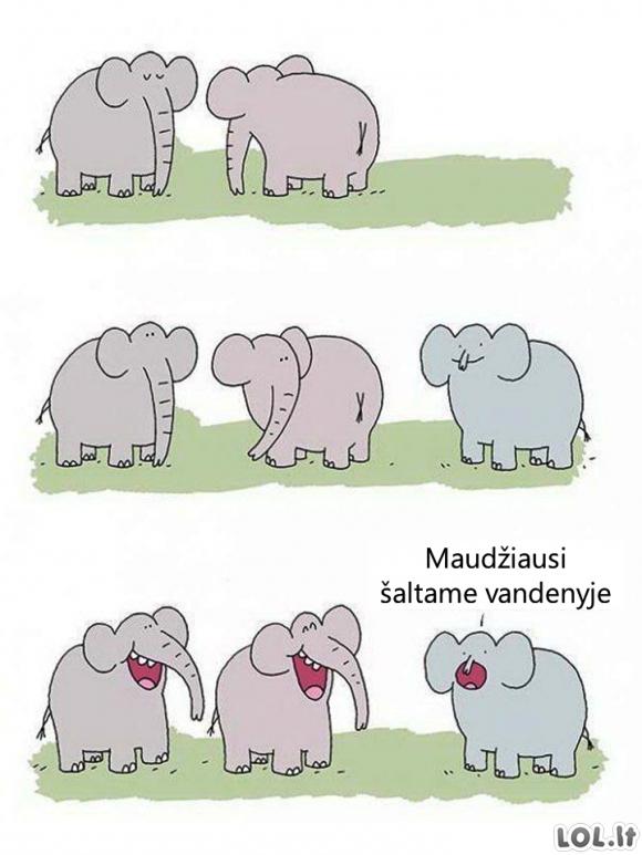 Susinepatoginęs dramblys