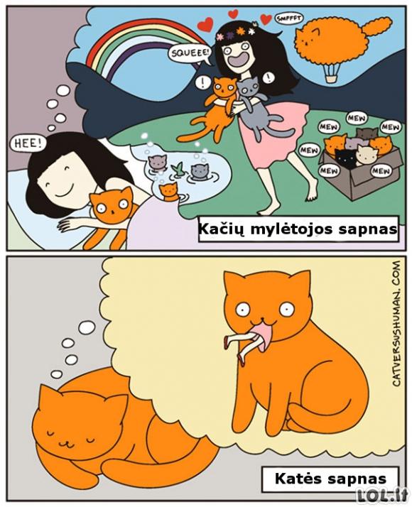 Katės ir šeimininkės sapnai