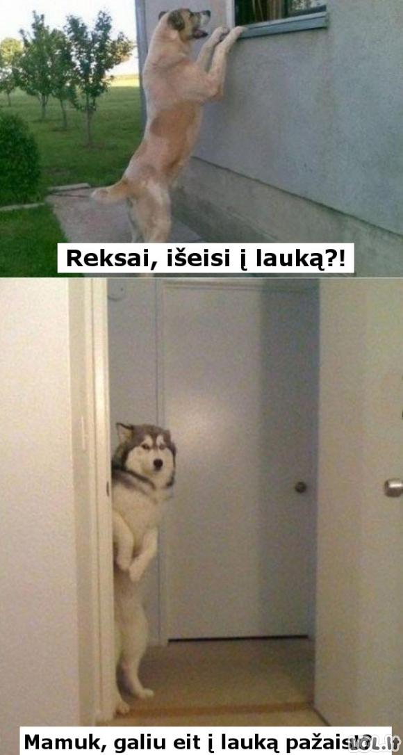 Šuniškas draugelis