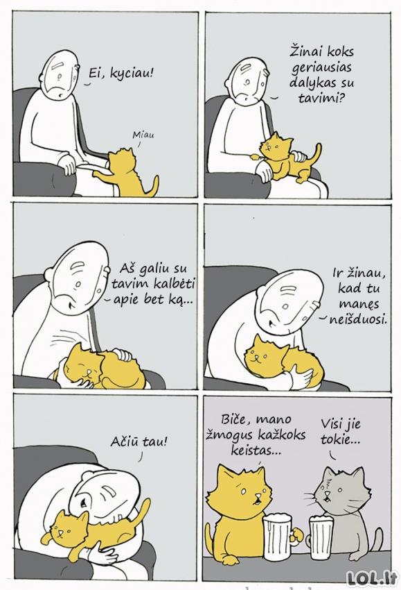 O ką jei katės mus apkalba?