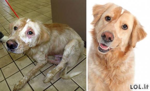 Šuneliai, kurie gavo antrą šansą gyvenime
