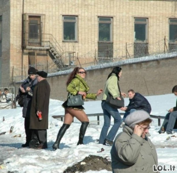 Žiema juokingai ir linksmai