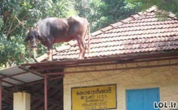 Indija - keistenybių šalis