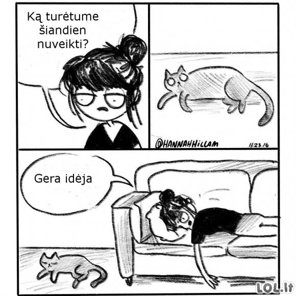Planas pagal katiną