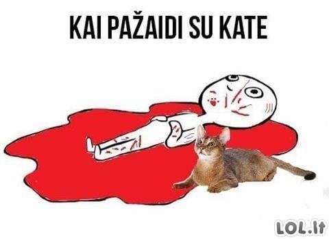 Kai pažaidi su kate