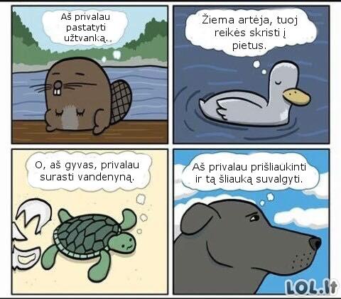 Išmintingi gyvūnai