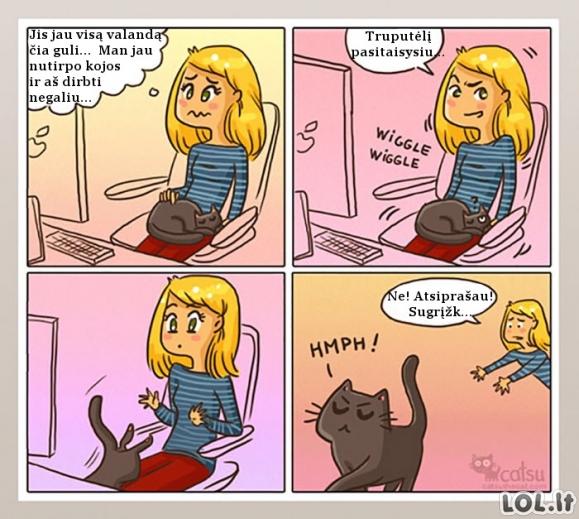 Kai katiniukas tavimi pasitiki