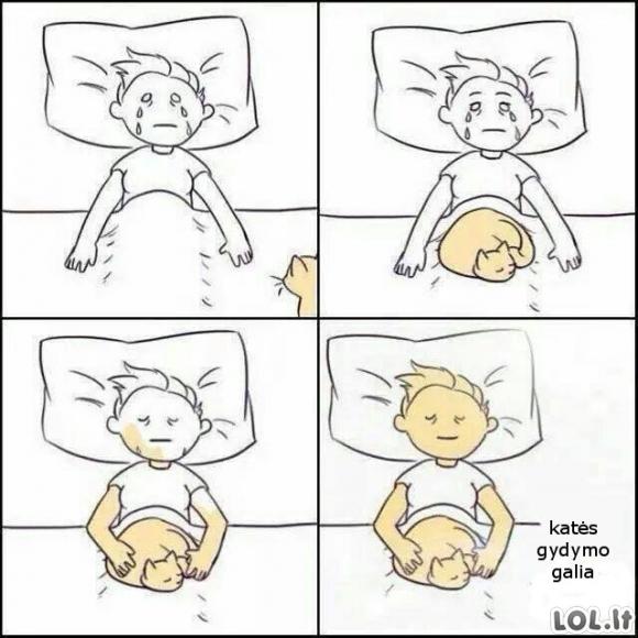 Katės gydymas