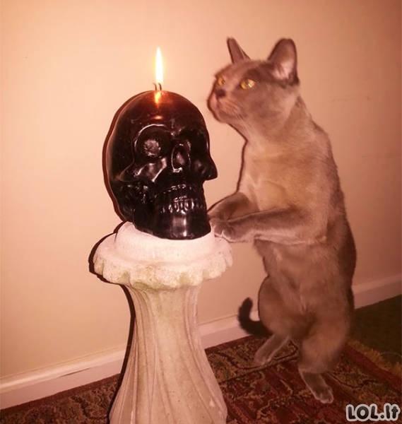 Ar jūsų katukas irgi satanistas?