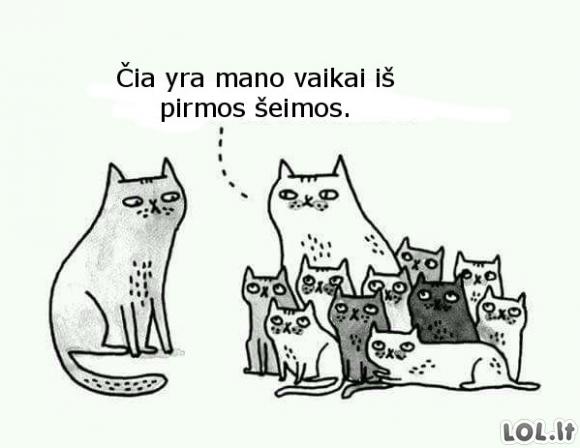 Kačių šeima