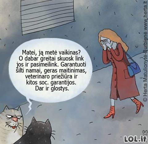 Gudrios katės