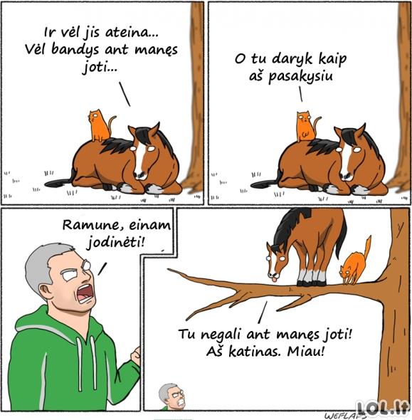 Kai arklys susideda su katinu
