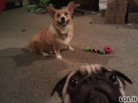 Šuniukai, sugadinantys nuotraukas