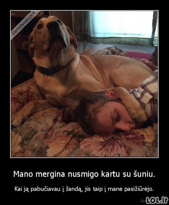 Tikras sarginis šuo