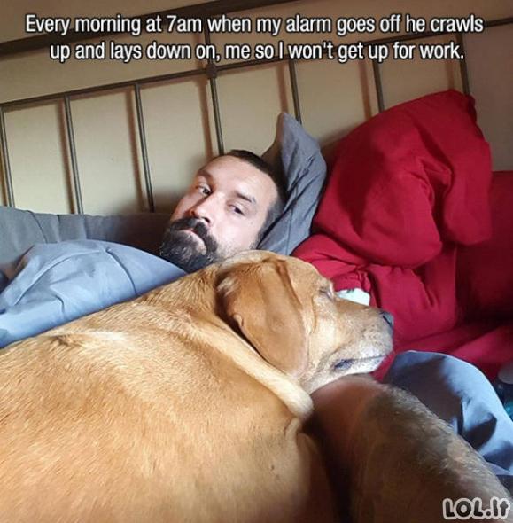 Mieli ir protingi šunys