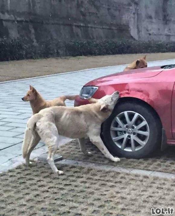 Kai šunys paima teisingumą į savo letenas