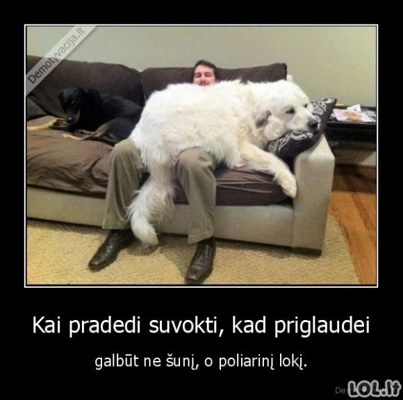Meška šuo