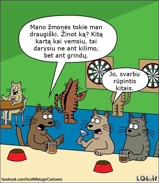 Supratingi katinai