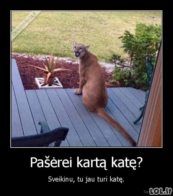 Kaip susirasti katę