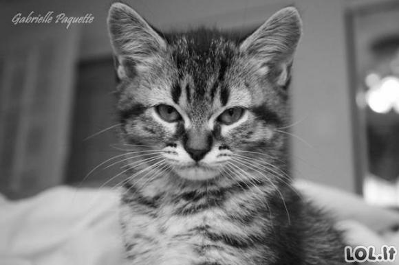 Mielų, bet piktų kačiukų galerija