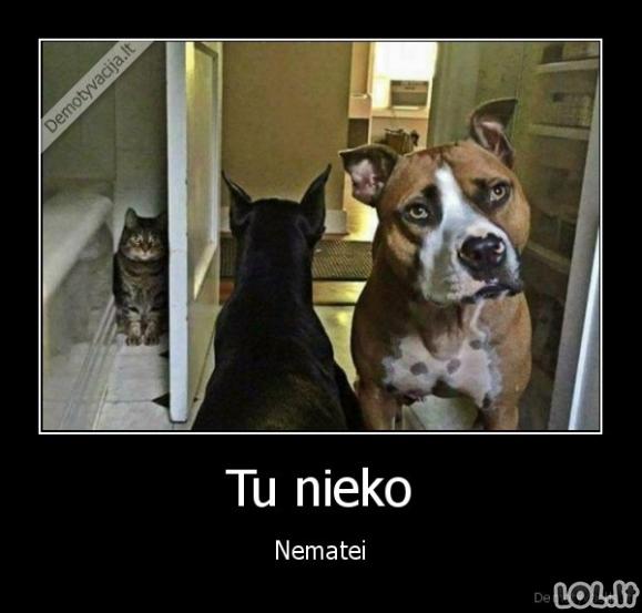 Peršikęs katinas
