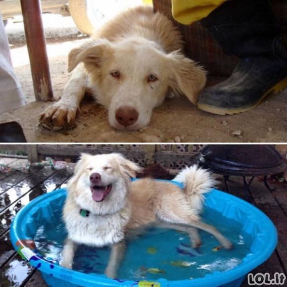 Augintiniai prieš ir po to, kai buvo paimti iš prieglaudų