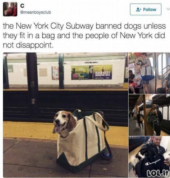 Šunys Niujorko Metro