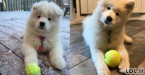 Maži ir užaugę šunys