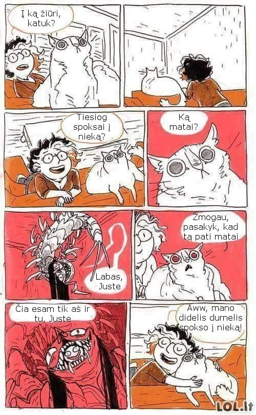 Katinas aiškiaregys
