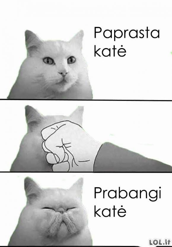 Kaip atsiranda prabangios katės?