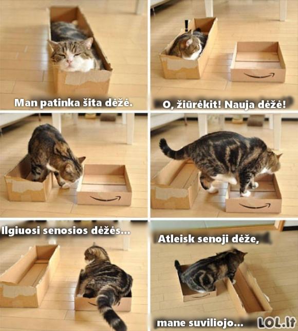 Katinas neišsirenka dėžės