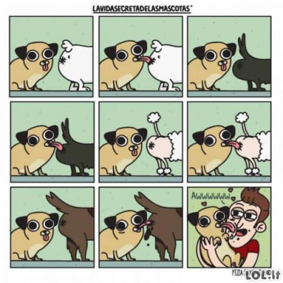 Šuniška meilė