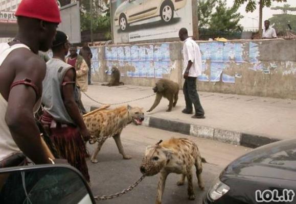Tuo tarpu Afrikoje....