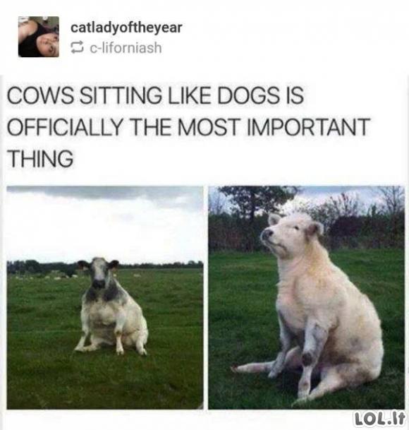 Kartais reikia perkrauti gyvūnus