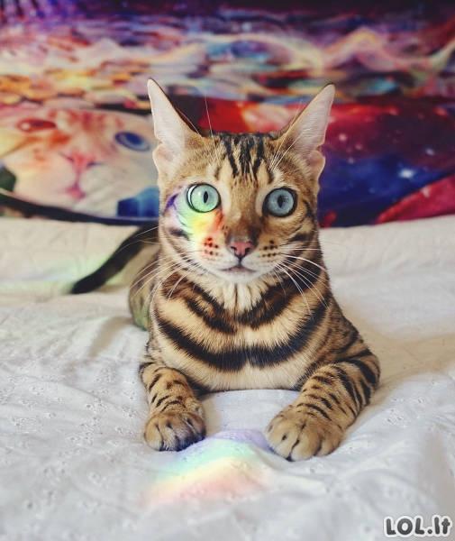 Katė, kuri, ko gero, buvusi daugiausia šalių pasaulyje
