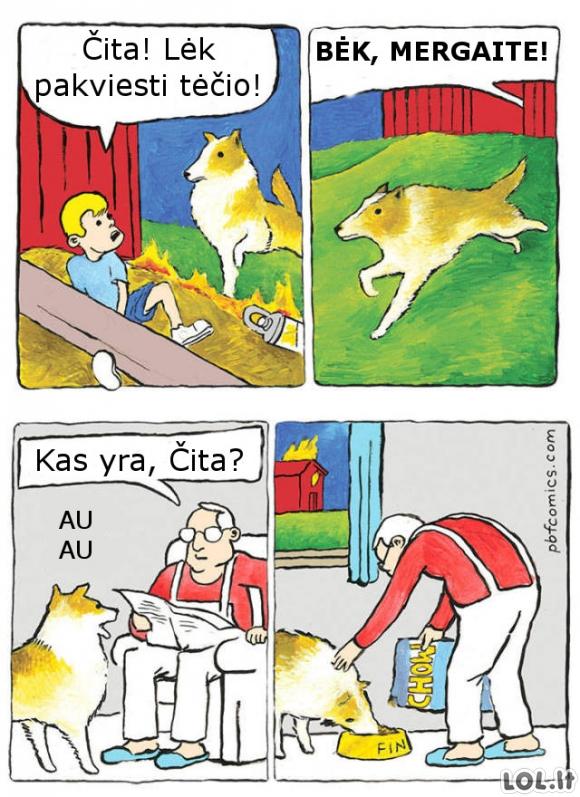 Šuo pagalbininkas