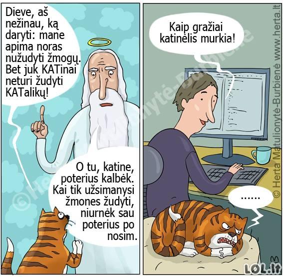 Didžioji katinų paslaptis