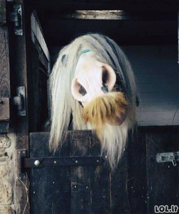 Ūsuotų arklių galerija