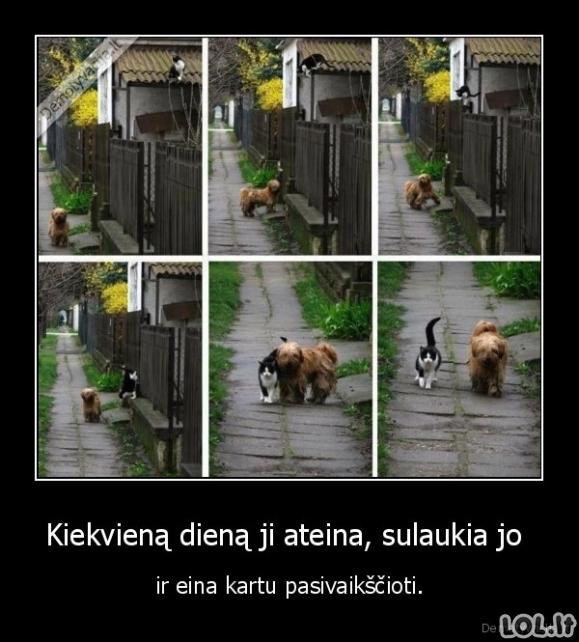 Tikra gyvūnų draugystė
