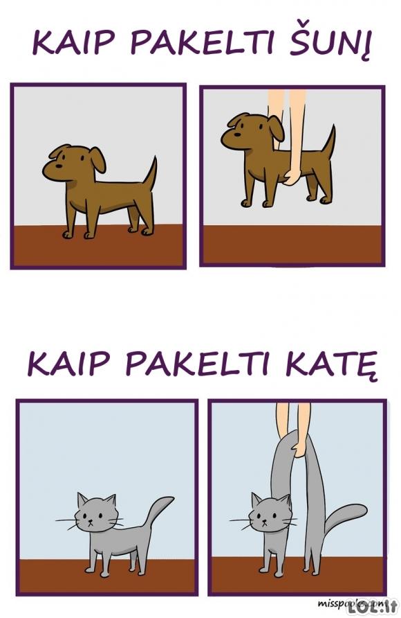 Kaip pakelti šunį ir katę